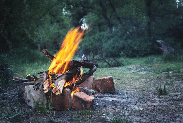 Ognisko W Wiosennym Lesie Premium Zdjęcia