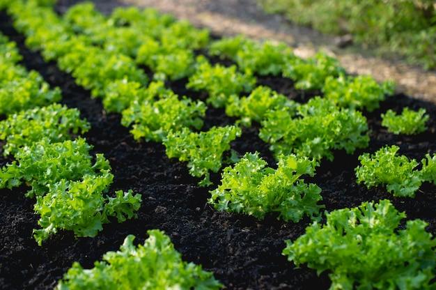 Ogród Warzywny Od Rolników Premium Zdjęcia
