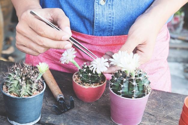 Ogrodnictwo kaktus w doniczce na drewnianym stole, kolor flim Premium Zdjęcia