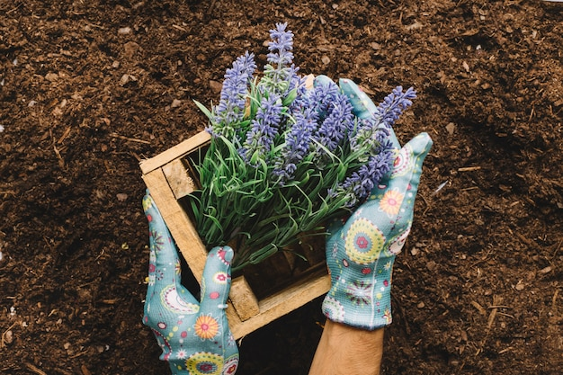 Ogrodnictwo Pojęcia Z Rąk Gospodarstwa Drewniane Pole Kwiat Darmowe Zdjęcia