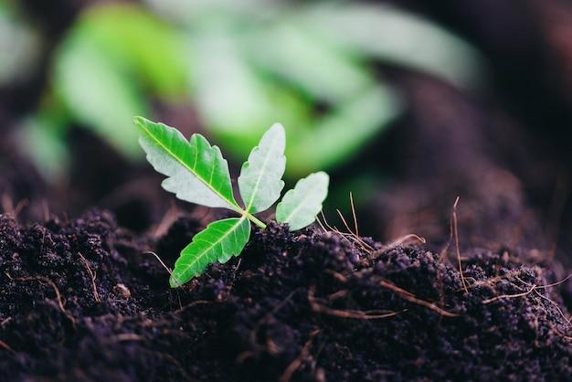 Ogrodnictwo sadzące sadzonki drzew młode rośliny rosną na glebie dzięki ekologii ekologicznej save world green Premium Zdjęcia