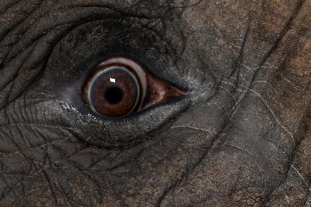 Oko Afrykańskiego Słonia Się Blisko Premium Zdjęcia