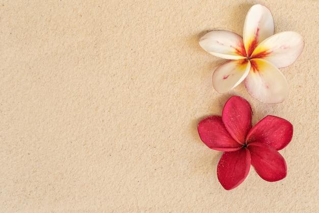 Okwitnięcia Plumeria Na Piasek Plaży Tle Premium Zdjęcia