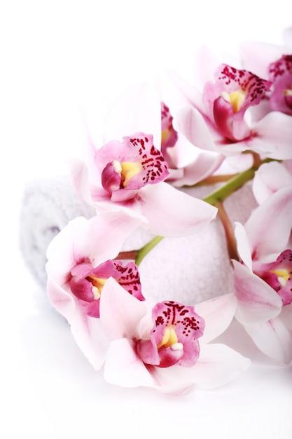Orchidea Na Białym Tle Darmowe Zdjęcia