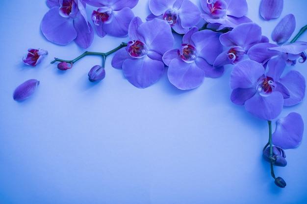 Orchidee Na Niebieskim Tle Premium Zdjęcia