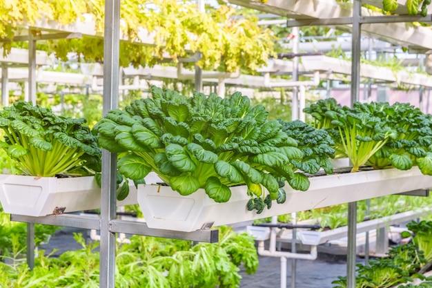 Organiczne warzywa w szklarni zdj cie darmowe pobieranie for Como establecer un vivero