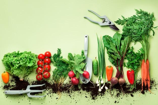 Organicznie warzywa na zielonym tle Premium Zdjęcia