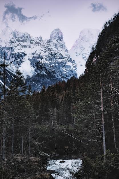 Ośnieżone Góry W Pobliżu Lasu Darmowe Zdjęcia