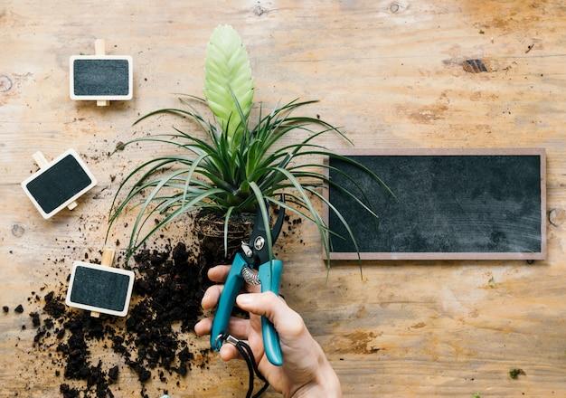 Osoba przycinanie liści roślina z sekatorem powyżej drewnianej ławce Darmowe Zdjęcia