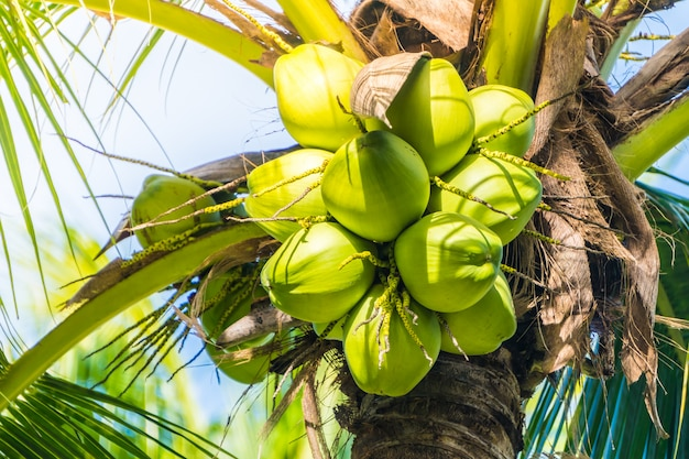 Owoc kokosa Darmowe Zdjęcia