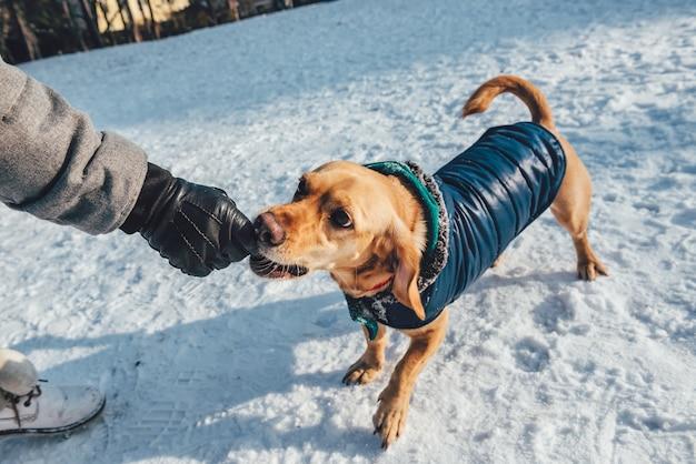 Pałeczki dla psów Premium Zdjęcia