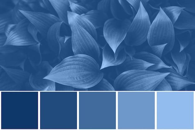 Paleta Kolorów Z Fakturami Natury, Liście Inspirowane Modnym Niebieskim Kolorem Roku 2020. Tło Tropikalny Liść. Koncepcja Mody Premium Zdjęcia