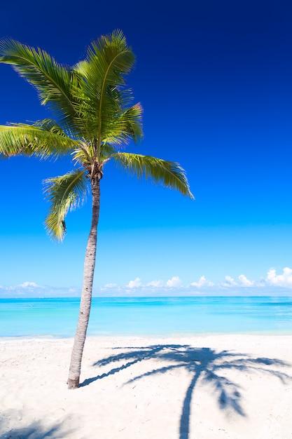 Palm i tropikalna plaża w varadero Premium Zdjęcia