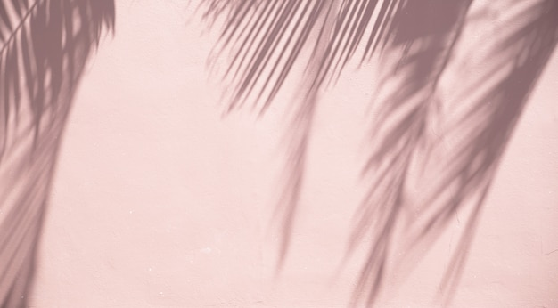 Palm Pozostawia Cienie Na Piaszczystej ścianie Darmowe Zdjęcia
