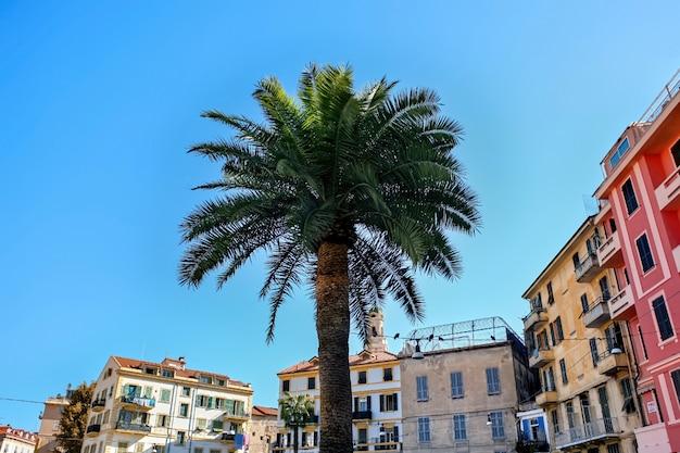 Palma Z Budynkami W Sanremo, Włochy Darmowe Zdjęcia