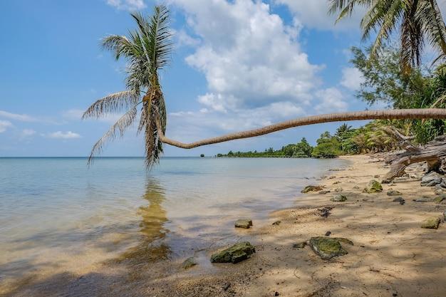 Palmy Na Plaży Wsparty Na Morzu W Słońcu I Błękitne Niebo Darmowe Zdjęcia