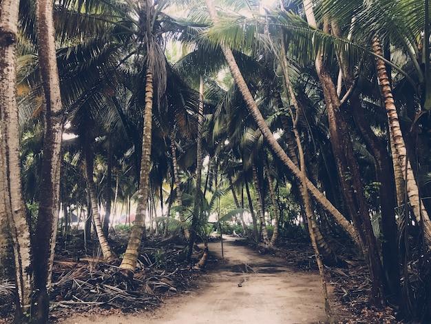 Palmy Rosną Obok Siebie W Dżungli Darmowe Zdjęcia