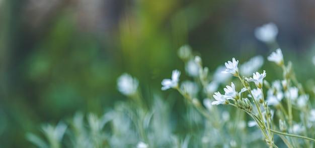 Panoramiczny Widok Na Wiosnę Tło Sztuki Z Białymi Kwiatami. Dzień Wiosny, Zbliżenie, Płytkie Głębiny Pola. łąka Z Wiosennych Kwiatów W Słoneczny Dzień Premium Zdjęcia