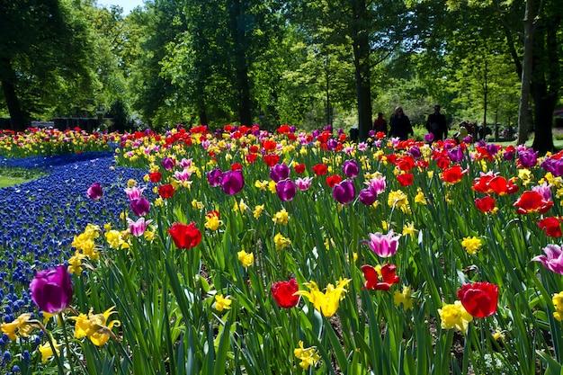 Park Tulipanów Premium Zdjęcia