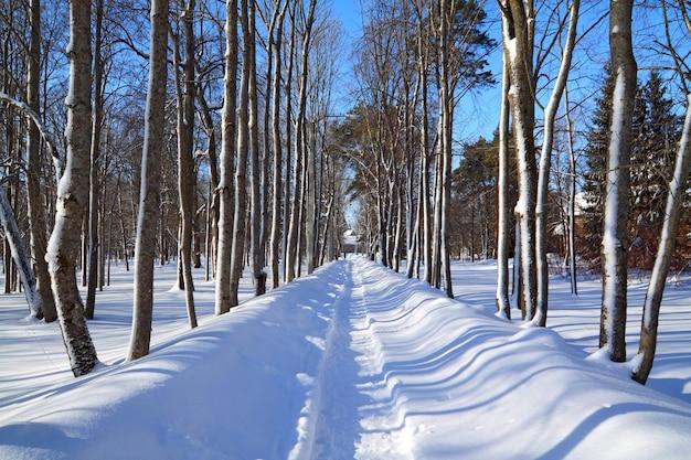 Pas śniegu W Winter Park Premium Zdjęcia