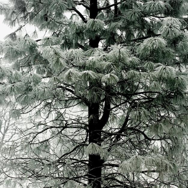 Pastelowe Zielone Drzewo Ze śnieżnymi Gałęziami Darmowe Zdjęcia