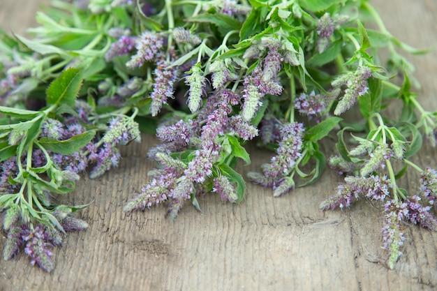 Pęczek ziół kwitnących mięty pieprzowej. zioła medyczne. vintage wiejski styl wiejski. Premium Zdjęcia