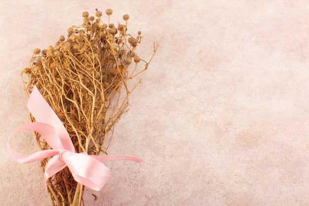 Peganum Harmala Roślina Suszona Na Różowym Drzewie Ze Zdjęciami Roślin Stołowych Darmowe Zdjęcia