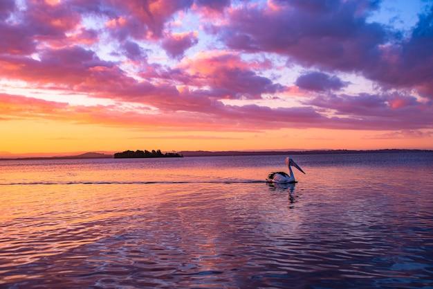 Pelikan Pływanie W Jeziorze Pod Złotym Pochmurnym Niebem O Zachodzie Słońca Darmowe Zdjęcia
