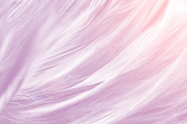 Pełna Klatka Strzał Różowe Pióro Premium Zdjęcia