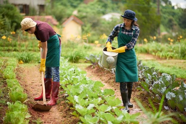 Pełny Strzał Azjatyckich Rolników Uprawiających Rośliny W Gospodarstwie Darmowe Zdjęcia