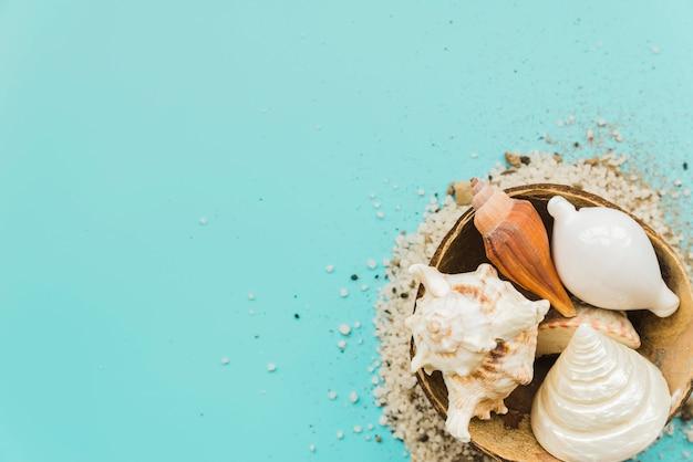 Piasek wokół muszelek umieszczonych w łupinach orzecha kokosowego Darmowe Zdjęcia