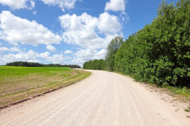 Piaszczysta Droga Przez Pola Z Kukurydzą I Lasem. Wiosenny Krajobraz Premium Zdjęcia