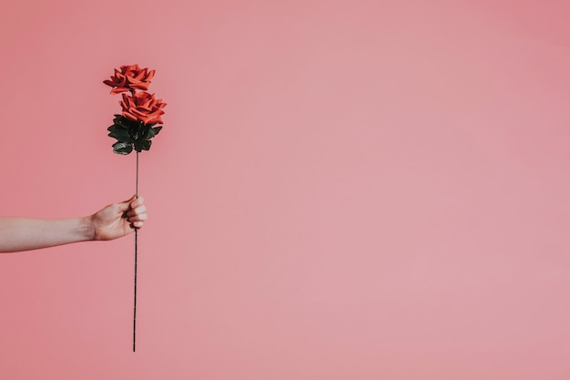 Piękna czerwona róża na walentynki Darmowe Zdjęcia