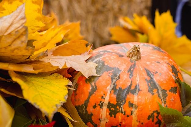 Piękna Dekoracja Dyni I Liści Jesienią Na Halloween. Premium Zdjęcia