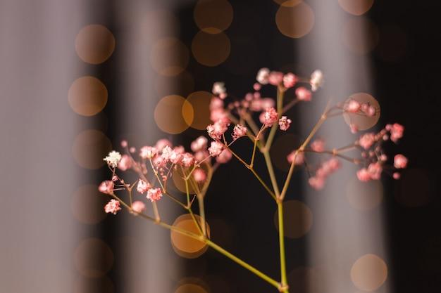 Piękna Dekoracja śliczne Małe Suszone Kolorowe Kwiaty Na Ciemnej Czerni, Tapeta. Darmowe Zdjęcia