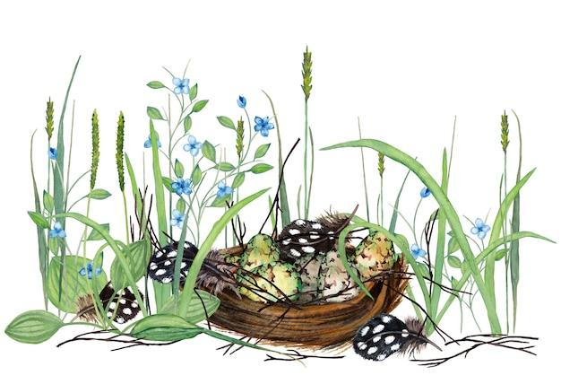 Piękna Ilustracja Realistyczne Jaja Przepiórcze W Gnieździe Z Suchymi Gałęziami, Piórami, świeżą Trawą I Kwiatami. Akwarela Ilustracja Premium Zdjęcia