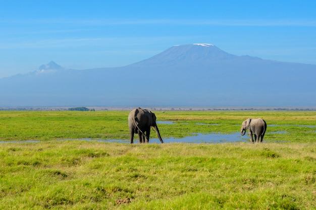 Piękna Kilimanjaro Góra I Słonie, Kenja, Amboseli Park Narodowy, Afryka Premium Zdjęcia