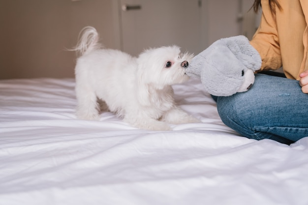 Piękna kobieta bawić się z jej ślicznym psem w domu Premium Zdjęcia