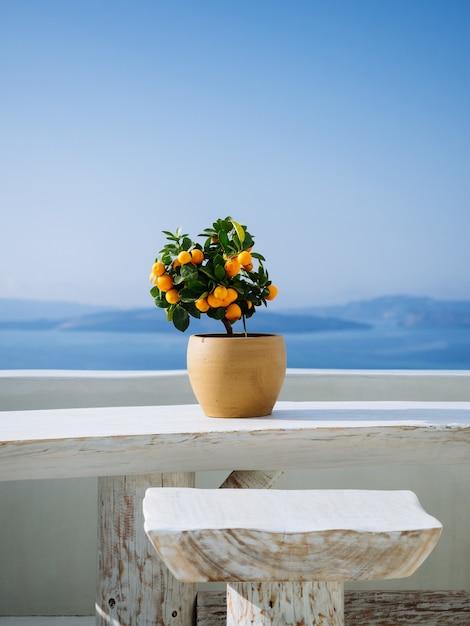 Piękna Pomarańczowa Roślina W Garnku Na Białym Kamiennym Balkonie Na Greckiej Wyspie Darmowe Zdjęcia