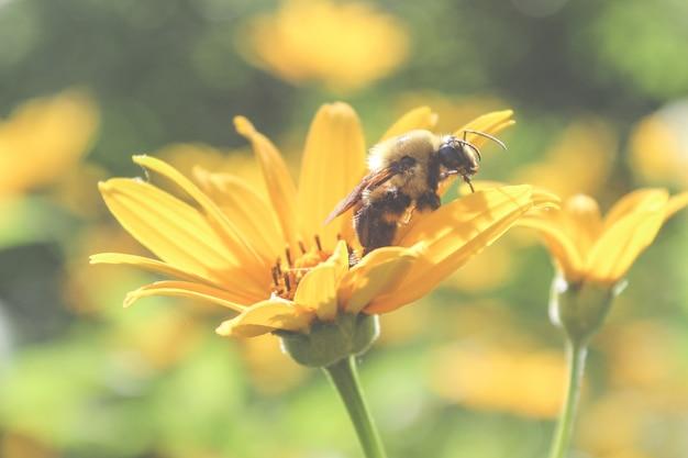 Piękna Pszczoła Na Kwiacie Darmowe Zdjęcia
