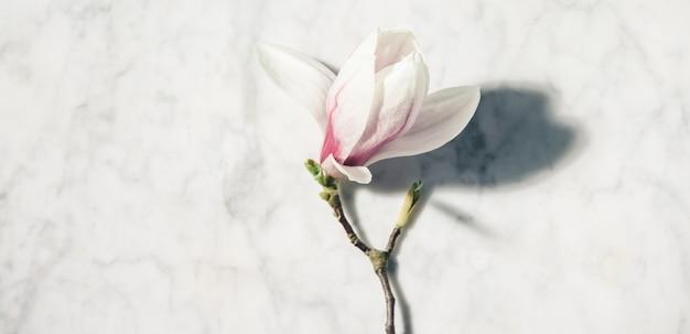 Piękna Różowa Magnolia Kwitnie Na Bielu Marmuru Stole. Widok Z Góry. Leżał Płasko. Koncepcja Minimalna Wiosna. Premium Zdjęcia