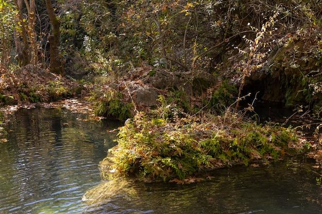 Piękna Rzeka W Naturze Premium Zdjęcia
