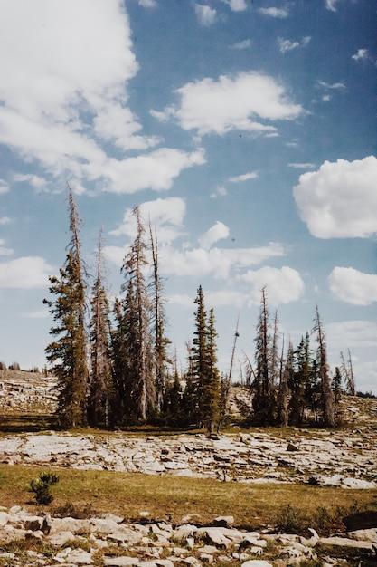 Piękna Sceneria Wsi Natura Z Wzgórzami I Drzewami Pod Chmurnym Niebieskim Niebem Darmowe Zdjęcia