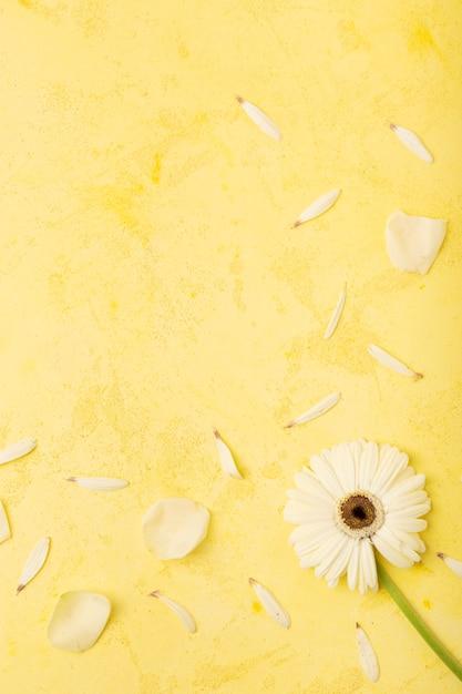 Piękna stokrotka i płatki z kolor żółty kopią interliniujemy tło Darmowe Zdjęcia