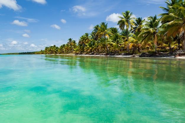 Piękna tropikalna plaża z białym piaskiem, palmami kokosowymi i turkusową wodą morską z karaibów. Premium Zdjęcia