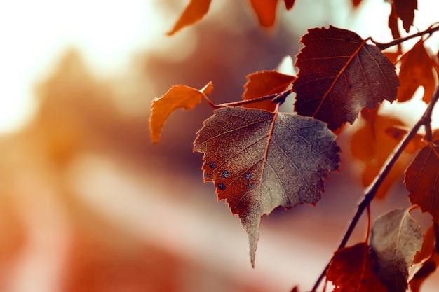 Piękne Autumn Leaves Na Jesieni Czerwone Tło Sunny Daylight Horizontal Darmowe Zdjęcia