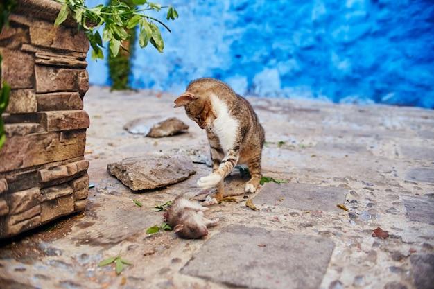 Piękne Bezpańskie Koty śpią Na Ulicach Maroka Premium Zdjęcia