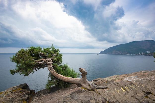 Piękne Chmury Stratus Nad Górami I Morzem. Jałowiec Na Skale. Rosja, Krym. Premium Zdjęcia