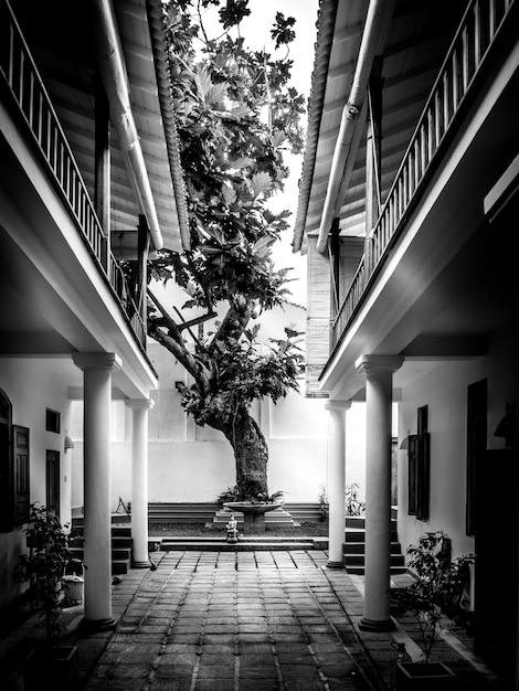 Piękne drzewo na podwórku Darmowe Zdjęcia