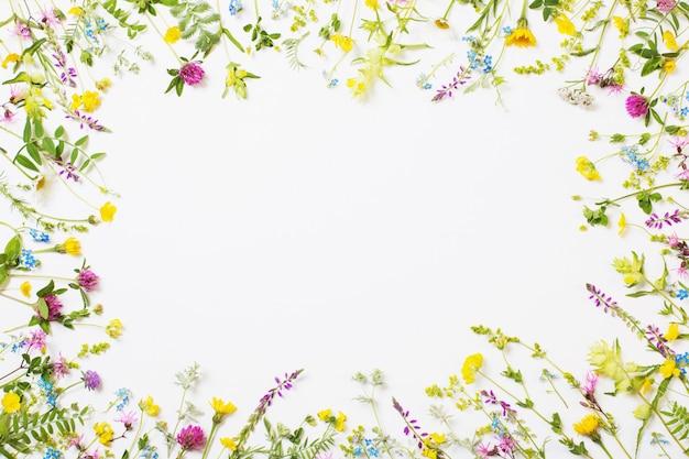 Piękne Dzikie Kwiaty Na Białym Tle Premium Zdjęcia